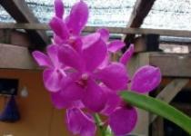 Wuuich Indahnya Bunga Anggrek Di…