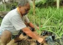 Manfaat arang dalam tanaman dan…
