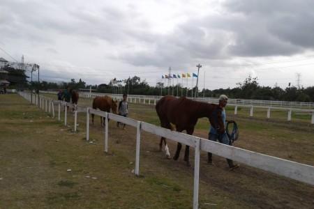 155 Ekor Kuda Akan Berlaga Memperebutkan Piala Sri Sultan