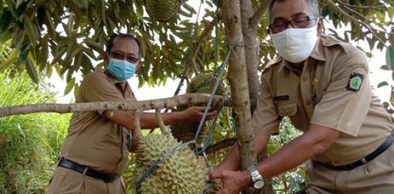 <a href='http://www.pastvnews.com/live-streaming/panewu-girimulyo-panen-durian-varites-montong-di-embung-kleco-kulonprogo.html'>Panewu Girimulyo Panen Durian Varites Montong Di Embung Kleco  Kulonprogo </a>