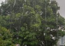 Pohon ini bergoyang di terpa angin…