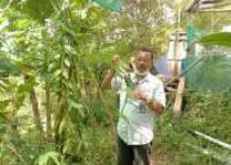 Javanis Vanili Been Produk Kulonprogo…
