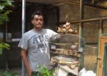 Tips Suryanto Peternak Burung Yang…