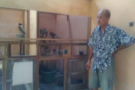 Pak Lurah Sidomulyo Bambanglipuro Bantul Sukses Beeding Murai Batu