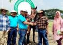Kuda Lady Aria Sabet Prestasi di…