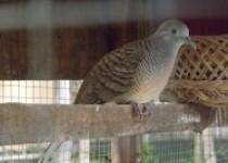 Mika bird farm ramaikan dunia hobi…