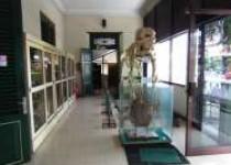 Melihat keragaman hayati ewat museum…