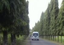 Pohon gelondong perindang jalan…