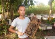 Ratu tawon jenis meli vera indika…