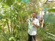 Javanis Vanili Been Produk Kulonprogo  Ngetren  Di Dunia