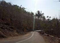 Rindu suasana desa asri pohon perindang…