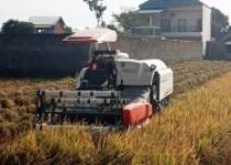 Alat pemanen padi otomatis canggih…