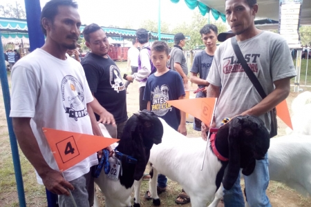 Jogja Exotarium Rayakan Ulang Tahun Dengan Mengelar Kontes Kambing Kaligesing