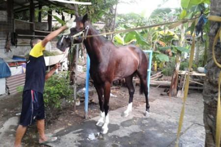 Laga Pacuan Kuda Jateng Derby 2019 DI Gelar Di Salatiga Jateng