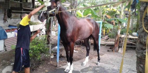 <a href='https://www.pastvnews.com/olah-raga-dan-bola/laga-pacuan-kuda-jateng-derby-2019-di-gelar-di-salatiga-jateng.html'>Laga Pacuan Kuda Jateng Derby 2019 DI Gelar Di Salatiga Jateng</a>