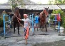 Pacukan Kuda Bupati Bantul Cup…
