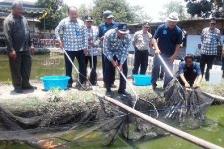 Bupati Sleman Panen Mina Ikan Bersama PWI DIY