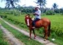 Aripin Mantan Kades Nglegi Patuk…