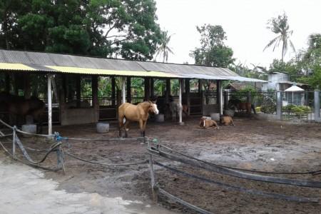 H.Subardiyono Beternak Kuda Di Lakoni sebagai Hoby Bisnis dan Srawung
