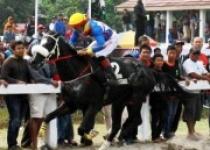 Kuda Pariwangi DIY Siap Bertarung…