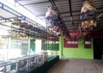 Peternakan Burung Perkutut di Kabupaten…