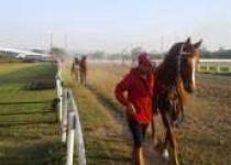 130 Kuda Siap Bertanding Dipacuan…
